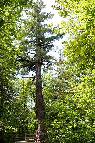 Нажмите на изображение для увеличения.  Название:071_large_white_pine_area.jpg Просмотров:116 Размер:2.77 Мб ID:102940