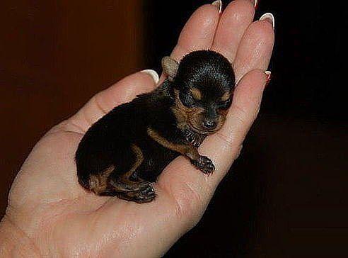 Название: Злая собака.jpeg Просмотров: 1758  Размер: 21.9 Кб