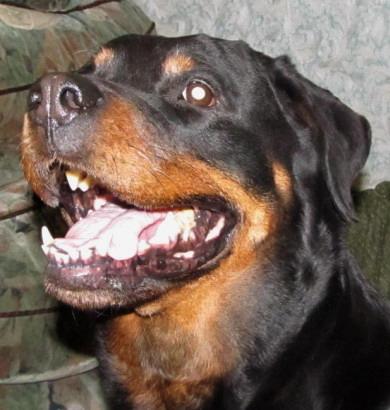 Название: smile.jpg Просмотров: 1077  Размер: 51.6 Кб
