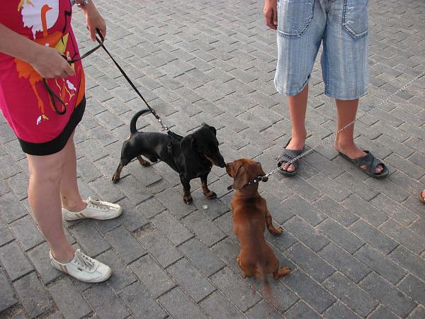 Нажмите на изображение для увеличения.  Название:dogs.jpg Просмотров:113 Размер:179.5 Кб ID:111884