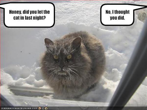 Нажмите на изображение для увеличения.  Название:funny_epic_cats_forgot_the_cat_outside3.jpg Просмотров:351 Размер:36.2 Кб ID:114124