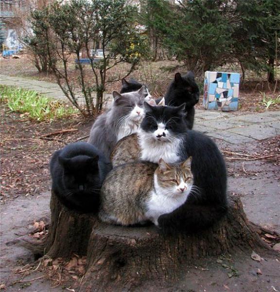 Нажмите на изображение для увеличения.  Название:коты.jpg Просмотров:92 Размер:102.0 Кб ID:114308