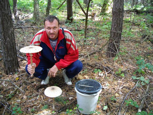 Нажмите на изображение для увеличения.  Название:Рублевка грибы 201.jpg Просмотров:104 Размер:1.86 Мб ID:123815