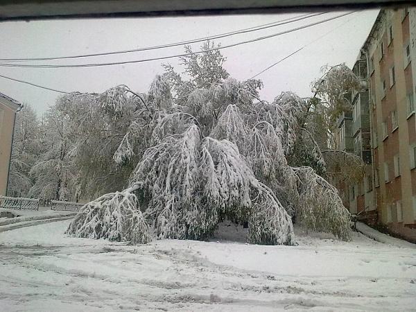 Нажмите на изображение для увеличения.  Название:Первый снег.jpeg Просмотров:123 Размер:239.5 Кб ID:125354