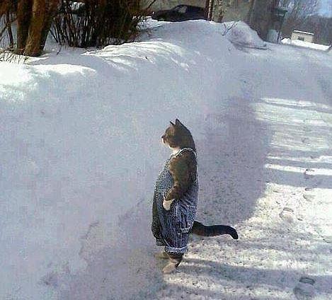 Название: коте.JPG Просмотров: 2194  Размер: 46.7 Кб