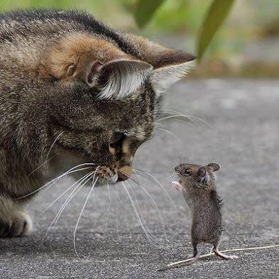 Название: кошки-мышки.JPG Просмотров: 1208  Размер: 44.9 Кб