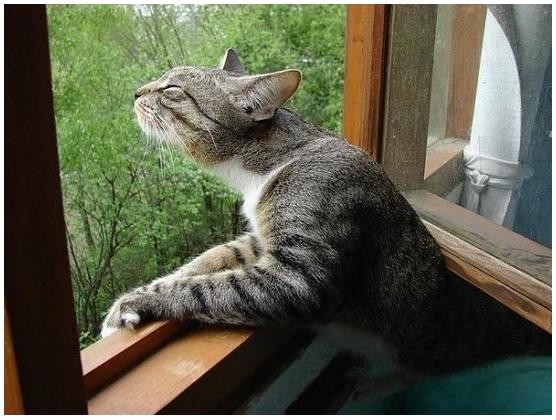 Название: Весна..кошками пахнет.PNG Просмотров: 1102  Размер: 489.6 Кб