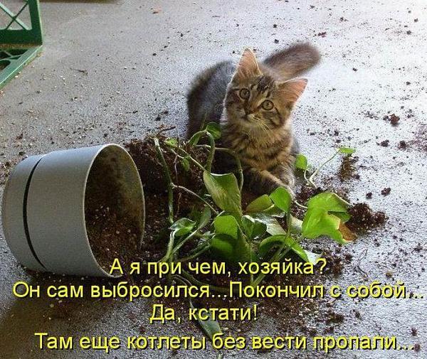 Нажмите на изображение для увеличения.  Название:кот.jpg Просмотров:242 Размер:124.9 Кб ID:136428