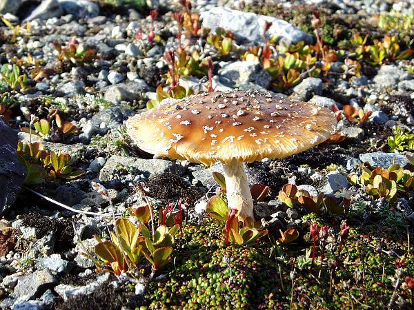 Нажмите на изображение для увеличения.  Название:Фото гриба....jpg Просмотров:70 Размер:2.61 Мб ID:140953