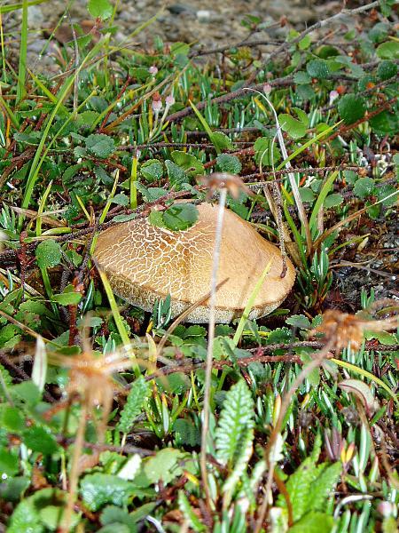 Нажмите на изображение для увеличения.  Название:Фото грибов...jpg Просмотров:76 Размер:2.54 Мб ID:140983