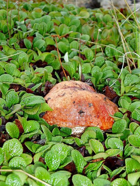 Нажмите на изображение для увеличения.  Название:Фото грибов....jpg Просмотров:69 Размер:2.55 Мб ID:140984