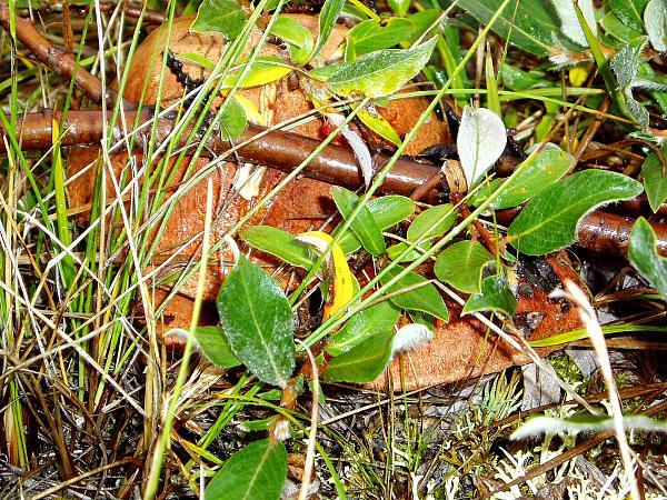 Нажмите на изображение для увеличения.  Название:Фото грибов.....jpg Просмотров:71 Размер:2.89 Мб ID:140985