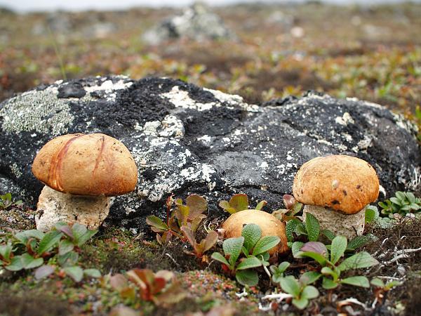 Нажмите на изображение для увеличения.  Название:Фото грибов.jpg Просмотров:68 Размер:1.43 Мб ID:140988