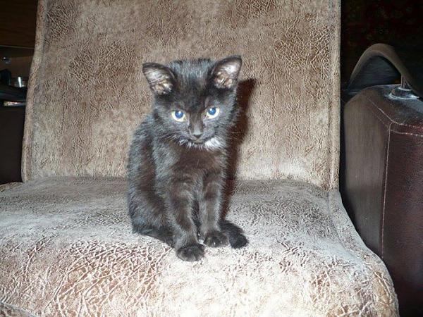 Нажмите на изображение для увеличения.  Название:cat-1.jpg Просмотров:69 Размер:113.4 Кб ID:152918