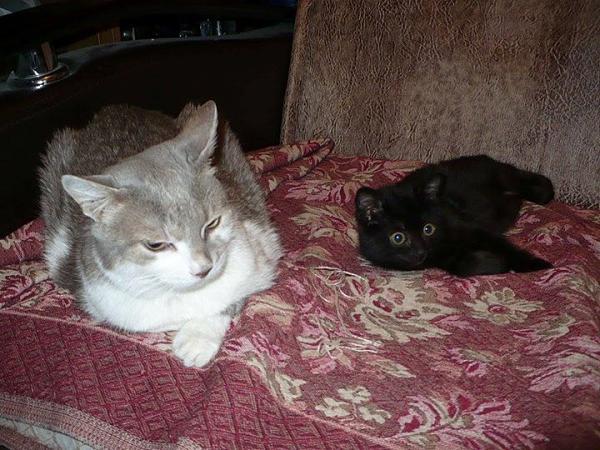 Нажмите на изображение для увеличения.  Название:cats.jpg Просмотров:64 Размер:93.5 Кб ID:152920