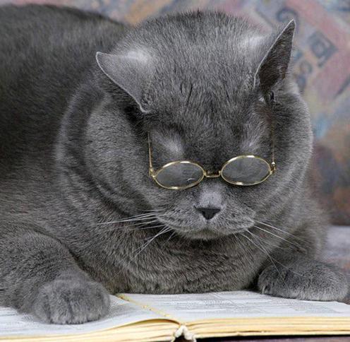 Название: кот уч.png Просмотров: 1805  Размер: 274.5 Кб