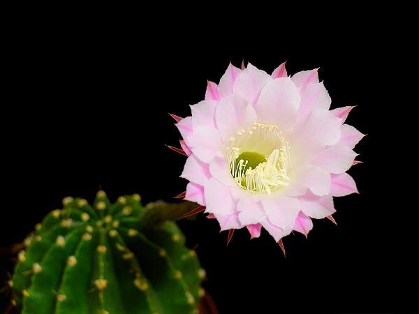 Нажмите на изображение для увеличения.  Название:Cactus_01.jpg Просмотров:33 Размер:268.2 Кб ID:164291