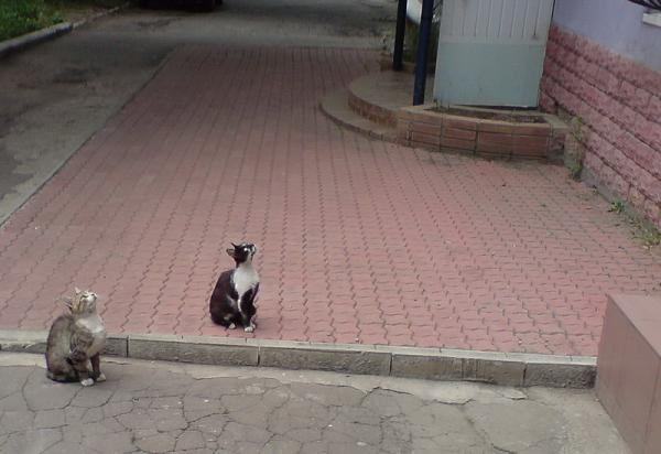 Нажмите на изображение для увеличения.  Название:коты.jpg Просмотров:16 Размер:107.6 Кб ID:169707