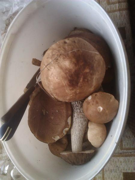 Нажмите на изображение для увеличения.  Название:грибы.jpg Просмотров:10 Размер:86.3 Кб ID:170389