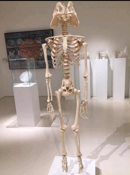 Название: скелет.png Просмотров: 1253  Размер: 146.9 Кб