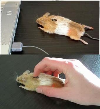 Название: Мышь.jpg Просмотров: 1730  Размер: 25.1 Кб