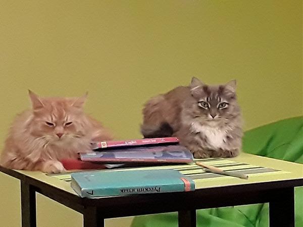 Нажмите на изображение для увеличения.  Название:коты.jpg Просмотров:3 Размер:1.19 Мб ID:183784
