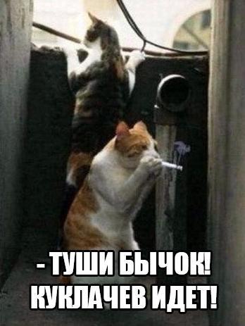 Название: кот.jpg Просмотров: 1810  Размер: 49.7 Кб
