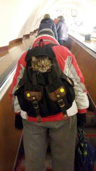 Название: котя.jpg Просмотров: 2158  Размер: 25.9 Кб