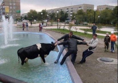 Название: корова.png Просмотров: 1283  Размер: 214.6 Кб