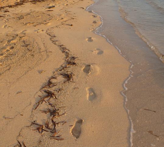 Название: footprints-forum.jpg Просмотров: 1115  Размер: 40.5 Кб