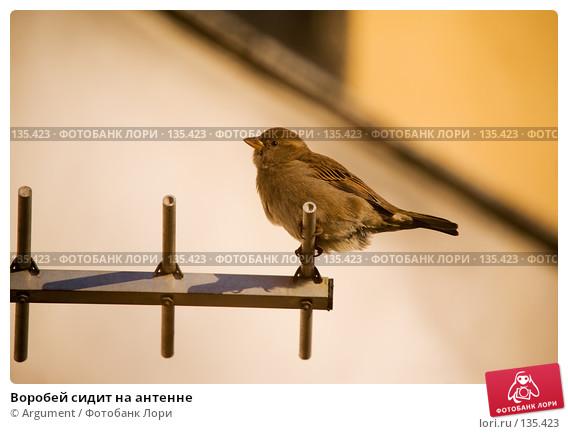 Название: vorobei-sidit-na-antenne-0000135423-preview.jpg Просмотров: 1650  Размер: 50.9 Кб