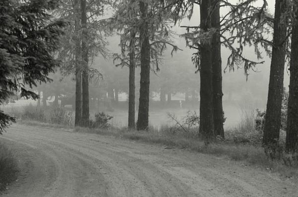Нажмите на изображение для увеличения.  Название:Pines_BW.jpg Просмотров:7 Размер:261.8 Кб ID:192852