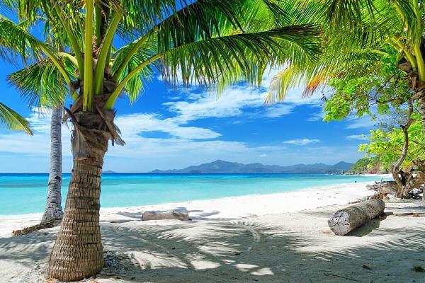 Название: palma.jpg Просмотров: 893  Размер: 66.6 Кб