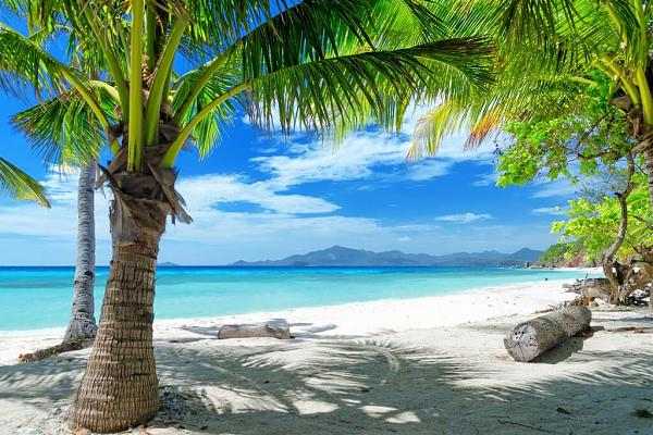 Название: palma.jpg Просмотров: 1205  Размер: 66.6 Кб