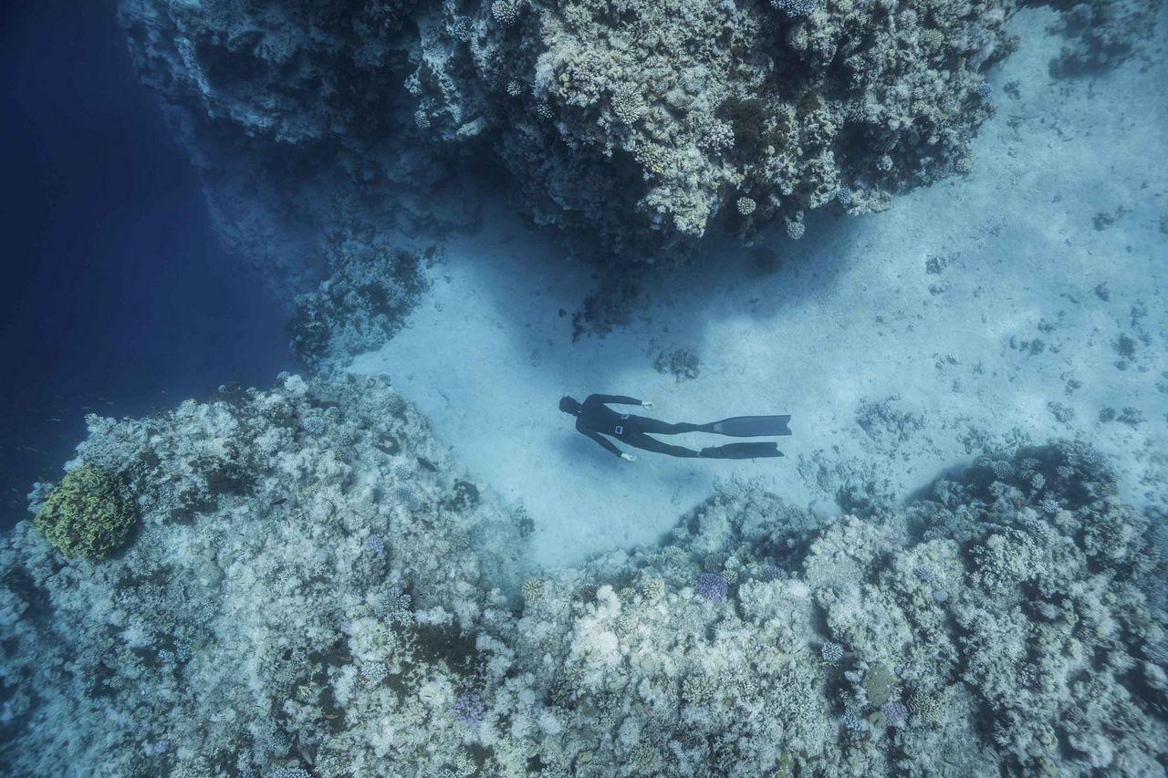 Нажмите на изображение для увеличения.  Название:diver.jpg Просмотров:2 Размер:224.7 Кб ID:193583