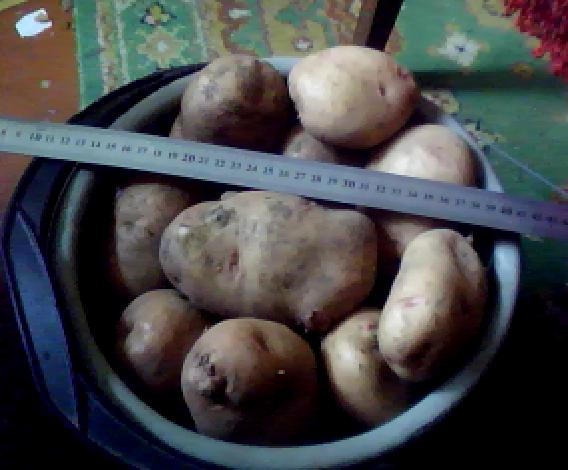 Название: картошка.png Просмотров: 958  Размер: 129.5 Кб