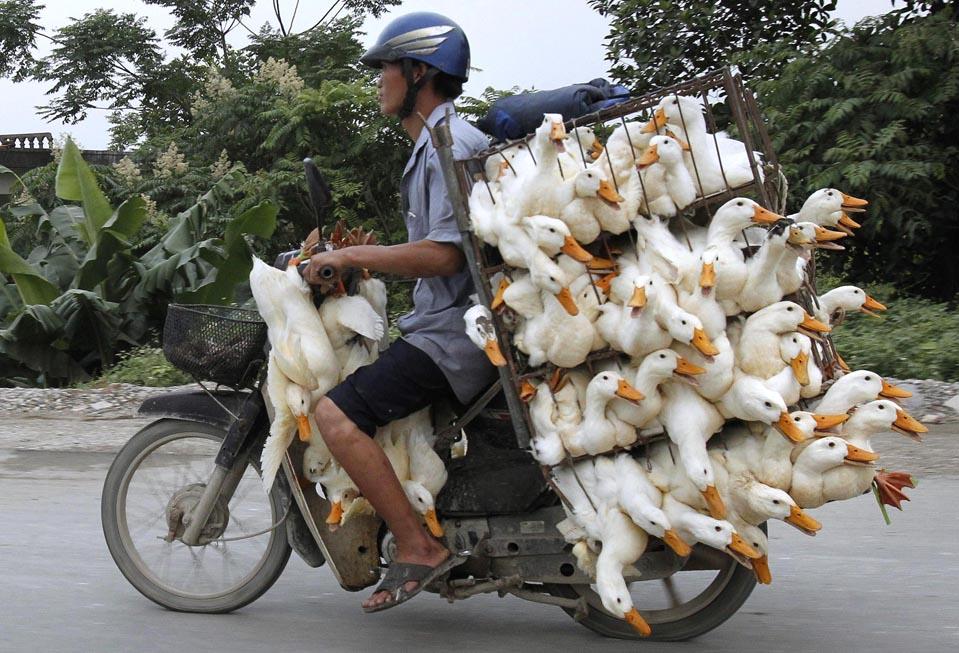 Нажмите на изображение для увеличения.  Название:ducks.jpg Просмотров:3 Размер:178.6 Кб ID:195263