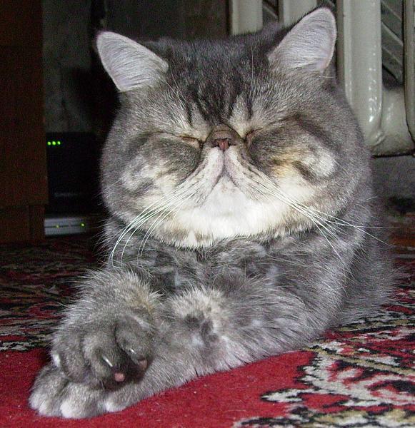 Нажмите на изображение для увеличения.  Название:cat_02.jpg Просмотров:7 Размер:348.7 Кб ID:198195