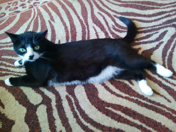 Нажмите на изображение для увеличения.  Название:кот.jpg Просмотров:5 Размер:1.09 Мб ID:201206