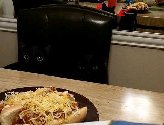 Название: cat.JPG Просмотров: 1039  Размер: 13.9 Кб