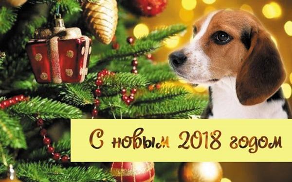 Название: otkrytki-s-novym-2018-godom-25.jpg Просмотров: 468  Размер: 91.3 Кб