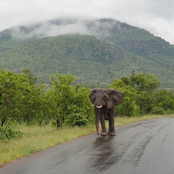 Нажмите на изображение для увеличения.  Название:Слон на дороге.jpg Просмотров:1 Размер:68.5 Кб ID:203001