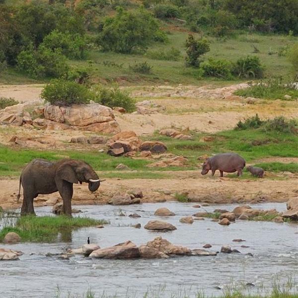 Нажмите на изображение для увеличения.  Название:Слон и Бегемоты.jpg Просмотров:1 Размер:83.4 Кб ID:203002