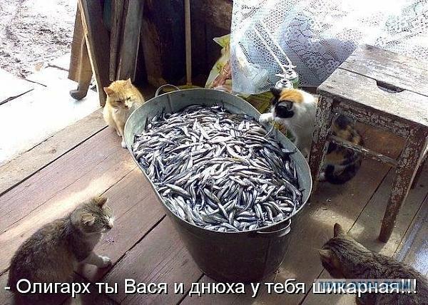 Нажмите на изображение для увеличения.  Название:proxy.imgsmail.ru.jpeg Просмотров:9 Размер:116.7 Кб ID:203828