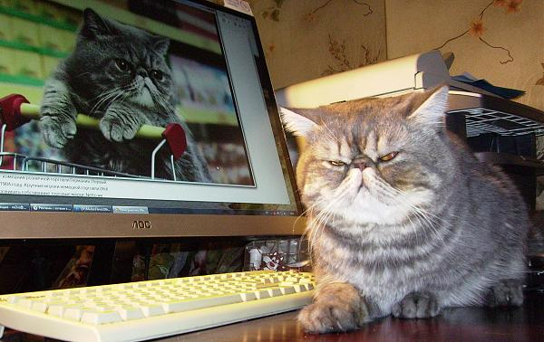 Нажмите на изображение для увеличения.  Название:cat_001.jpg Просмотров:16 Размер:620.3 Кб ID:206169