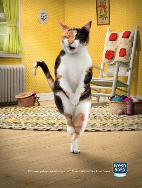 Нажмите на изображение для увеличения.  Название:cat_18.jpg Просмотров:11 Размер:341.8 Кб ID:210080