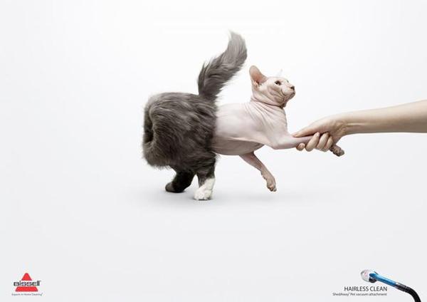 Название: cat_13.jpg Просмотров: 1822  Размер: 65.2 Кб