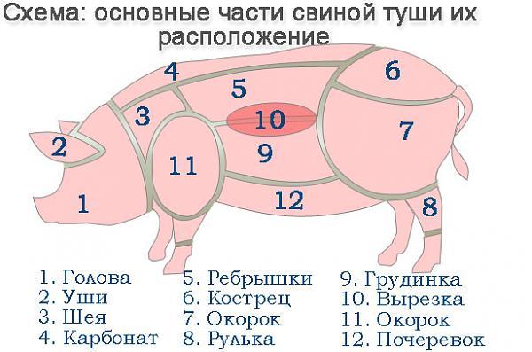 Нажмите на изображение для увеличения.  Название:shema-raspolozheniya-osnovnyh-chastej-tushi-svini.jpg Просмотров:9 Размер:58.7 Кб ID:214002