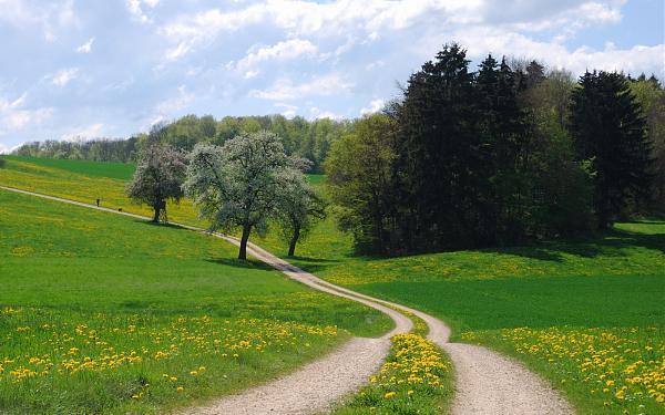 Нажмите на изображение для увеличения.  Название:дорога_поле_road_grass_summer_trees-607616.jpg Просмотров:17 Размер:447.7 Кб ID:214209