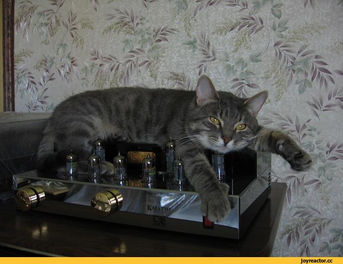 Нажмите на изображение для увеличения.  Название:кот -меломан.jpeg Просмотров:7 Размер:161.8 Кб ID:215900